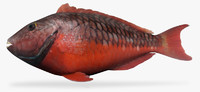x stoplight parrotfish