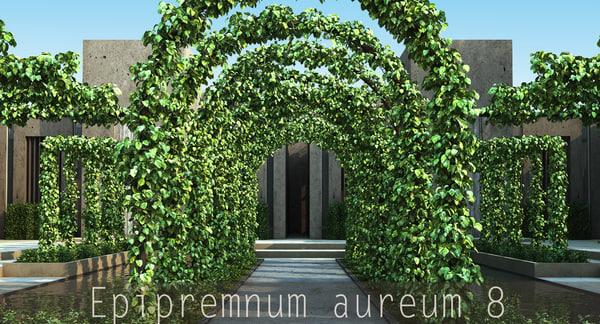 x epipremnum aureum