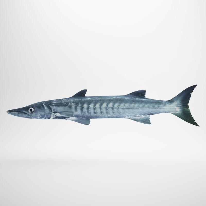 barracuda fbx