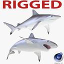spot-tail shark 3D models