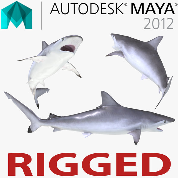 spottail shark rigged 3d ma