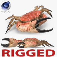 3d model tasmanian giant crab rigged