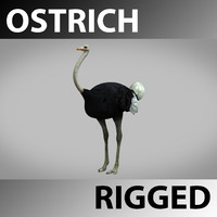 rigged ostriche 3ds