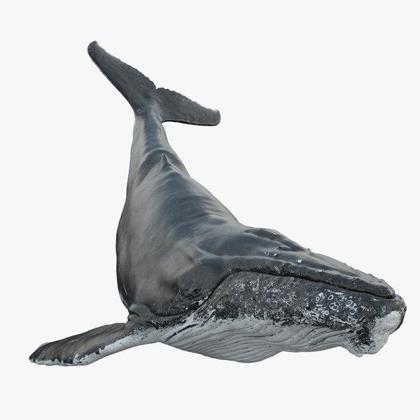 humpback whale rig obj