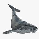 Humpback Whale 3D models