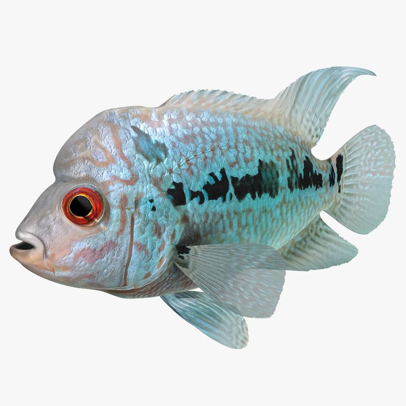 flowerhorn fish 3d max