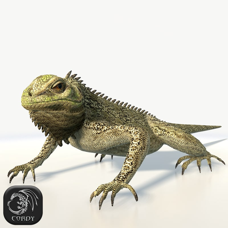 3d model of iguana resolution ready