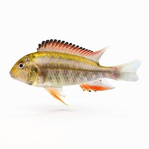 3d model simnochromis diagramma cichlid