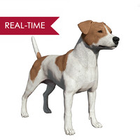 3d realistic jack russell dog