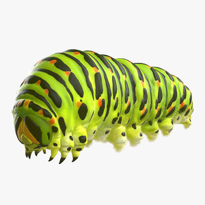 max swallowtail caterpillar papilio machaon