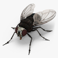 3d fly realistic model