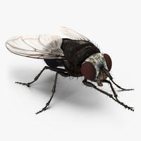 3d fly