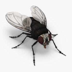 fly fur 3d max