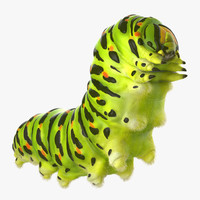 3d model caterpillar fur papilio machaon