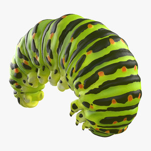 3d swallowtail caterpillar green model