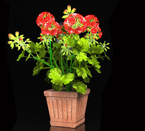 3d geranium vase model