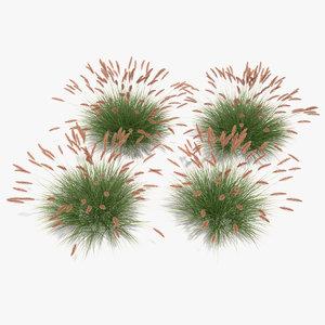 3d pennisetum fountain grass dwarf