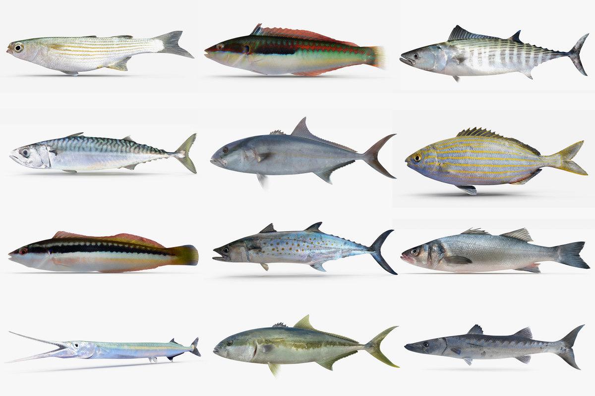 Mediterranean fish related keywords mediterranean fish for 13 fishing origin c