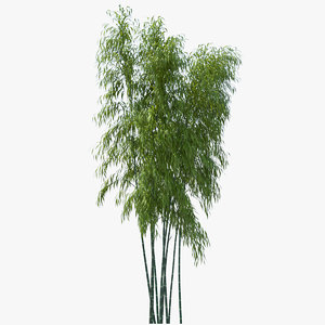 bamboo tree 3d obj