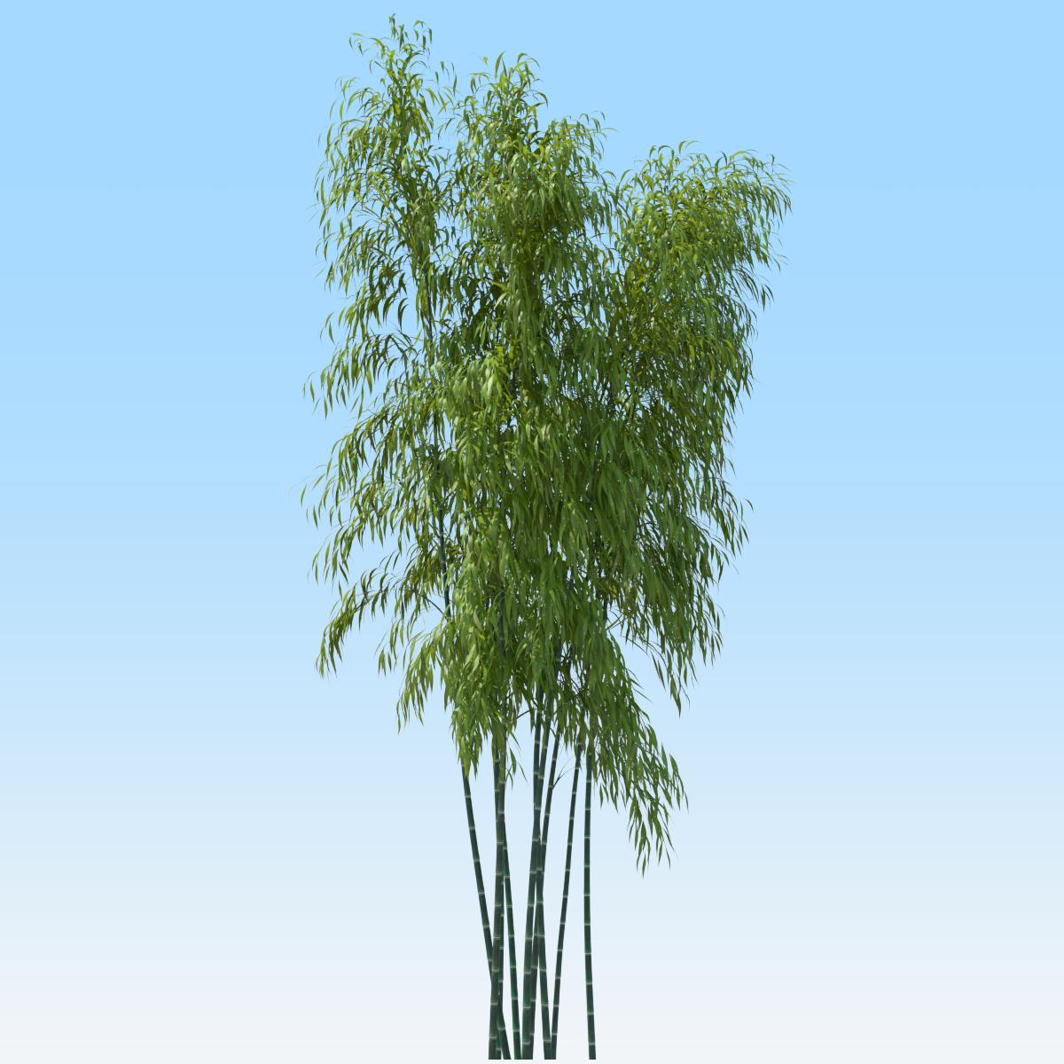 Bamboo Tree 3d Obj