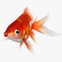 3d 3ds ryukin goldfish scanline animation
