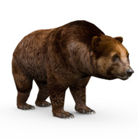 grizzly bear animations 3d max