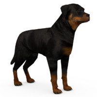 rottweiler animations 3d max