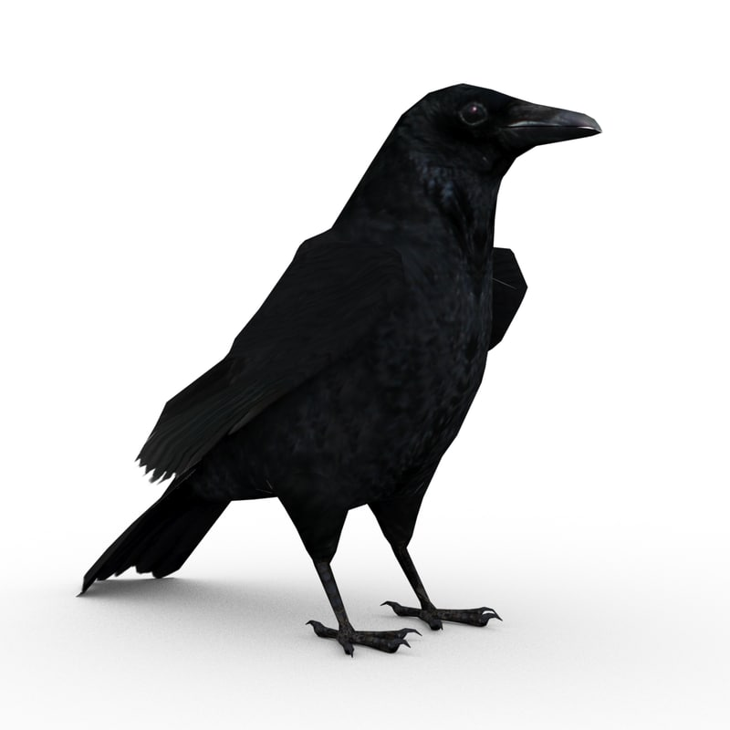crow animations 3d max