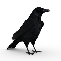Carrion Crow Animated