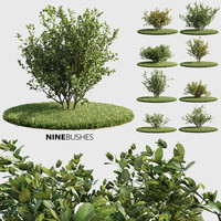 bushes v-ray corona 3d max