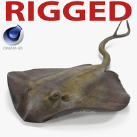 stingray rigged 3d model