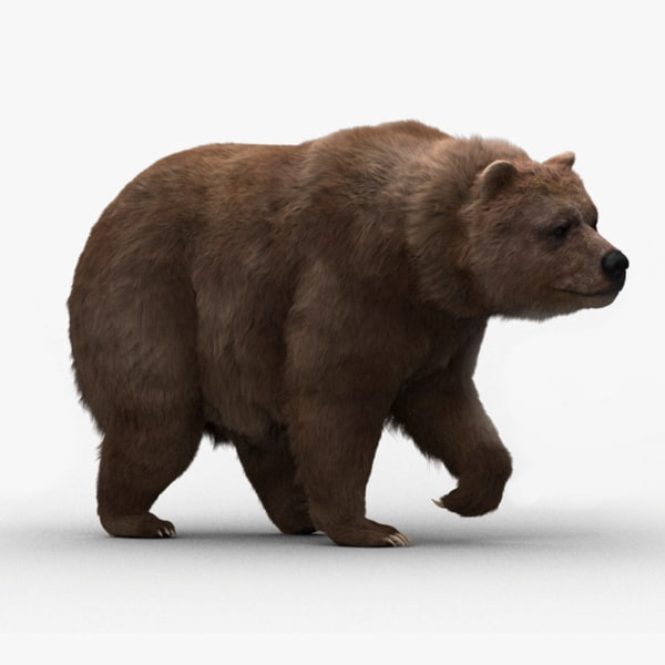 bear rigged fur 3d model