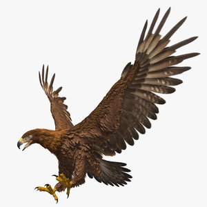 3d model golden eagle