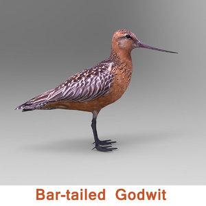 north american godwit 3ds