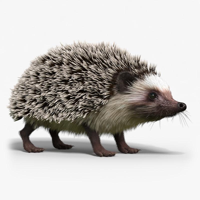 hedgehog fur 3d max