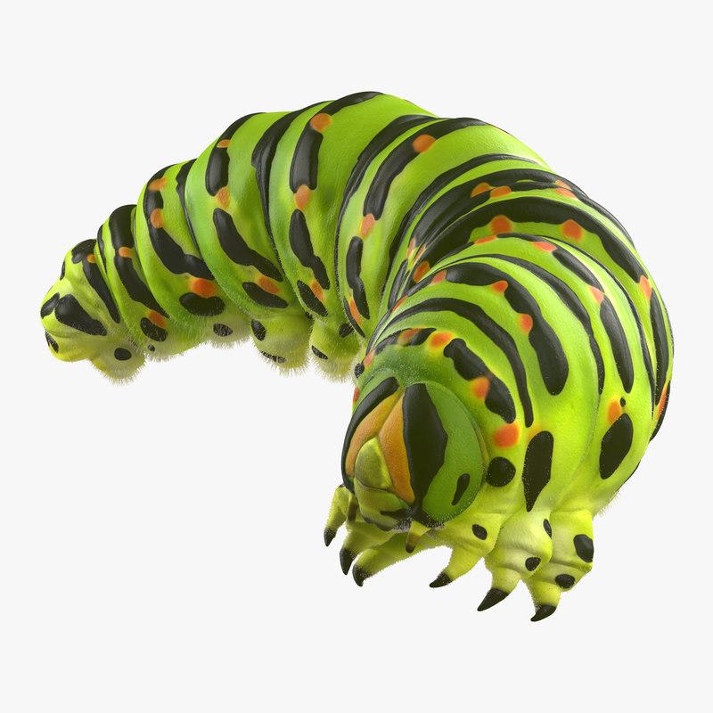 3d model caterpillar pose 4 fur