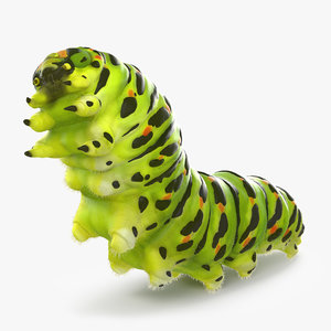 papilio machaon caterpillar rigged 3d max