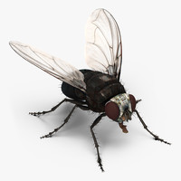 fly rigged 3d model