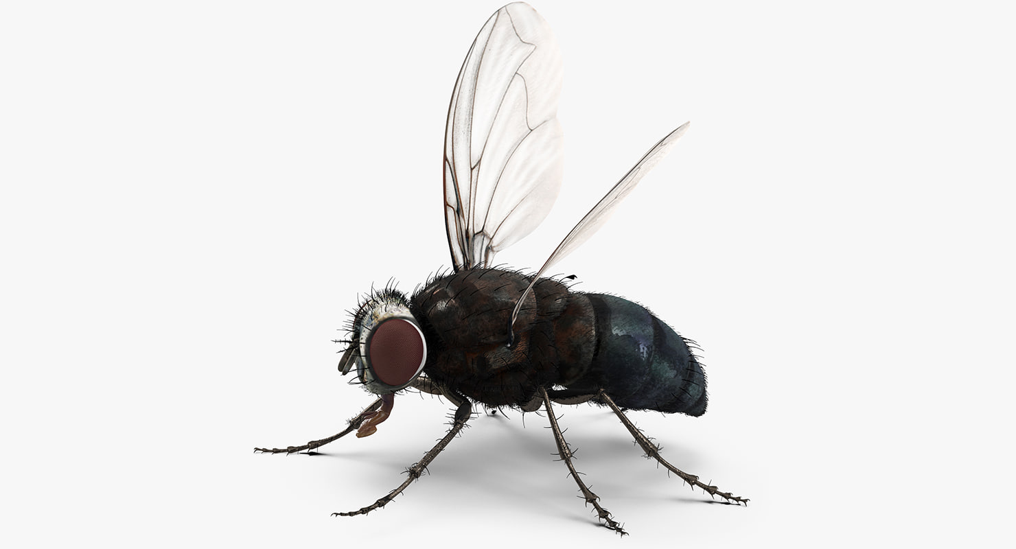 3d fly rigged fur model