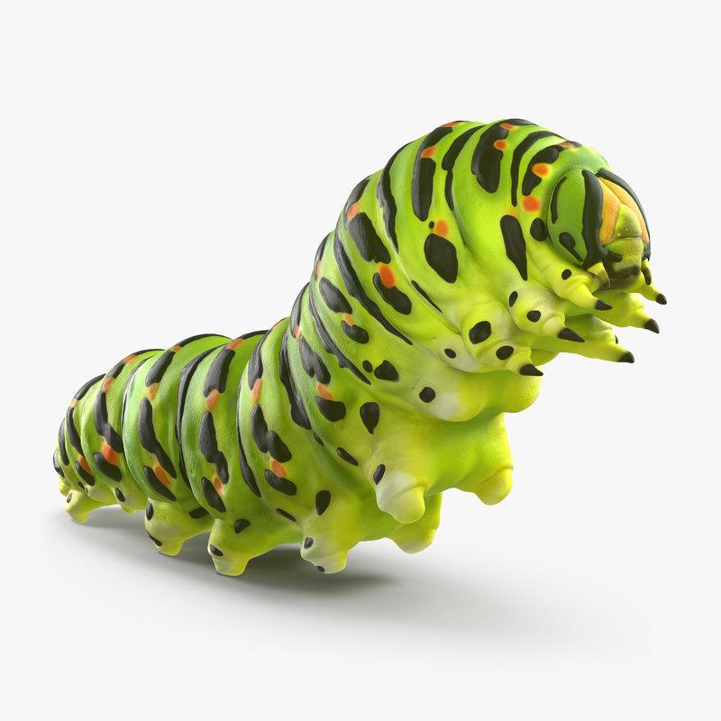 swallowtail caterpillar papilio machaon 3d max