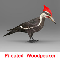 3d pileated woodpecker