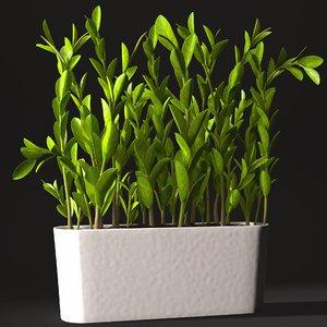 3d zamioculcas plant
