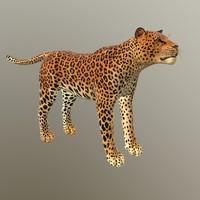 Leopard - lowpoly 3d model