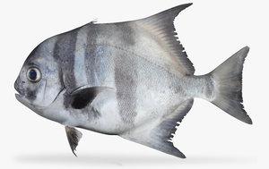 pacific spadefish x