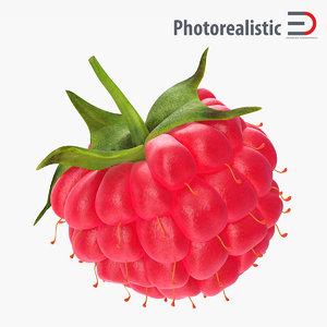 ripe raspberry modeled 3d model
