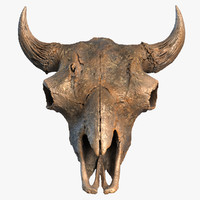 Buffalo Skull 3D Low Poly Model