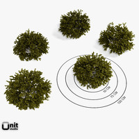 3d model of set plant