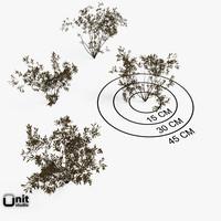 proxy set plant 3d model