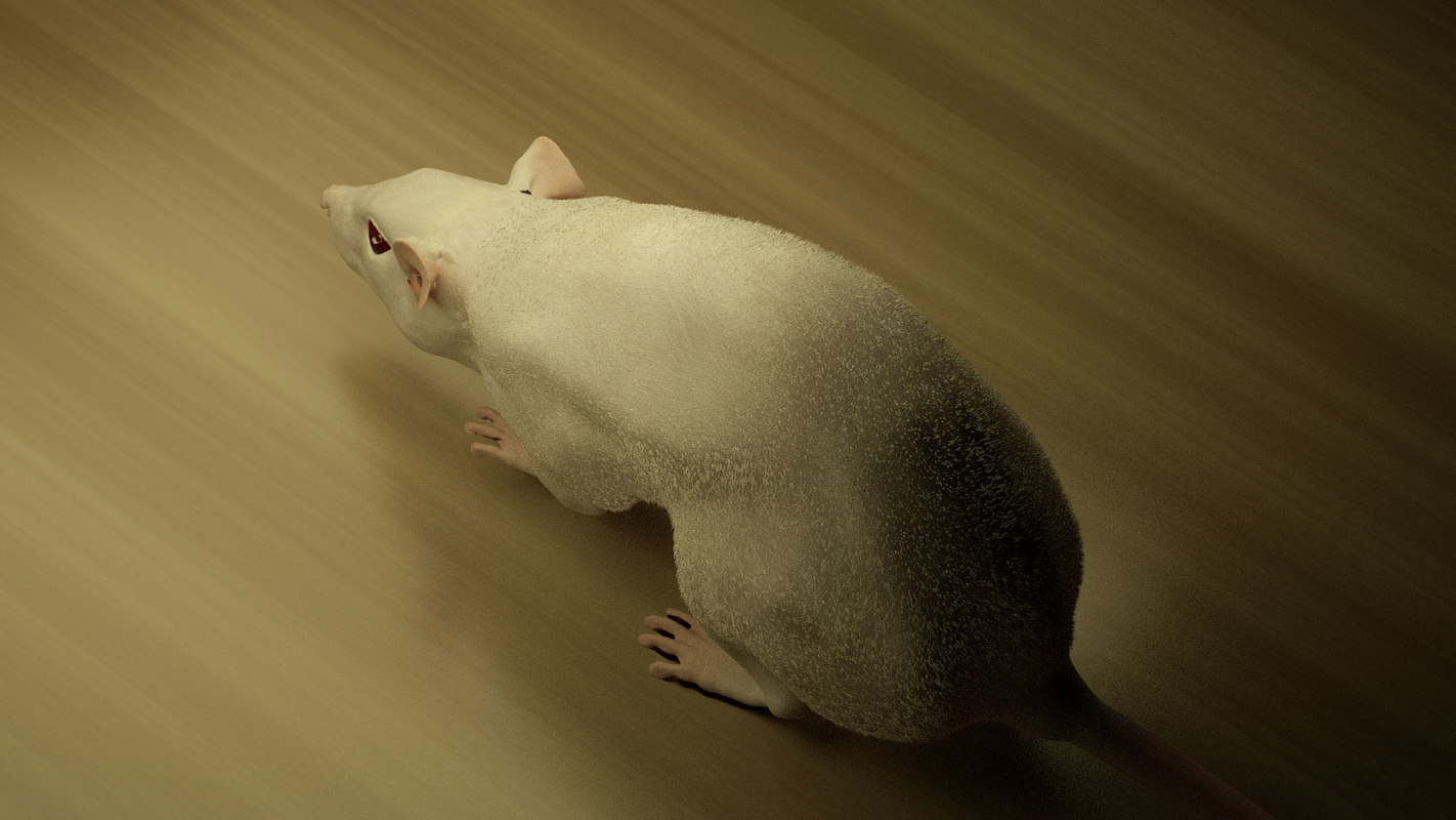 c4d rigged mouse rat 8k