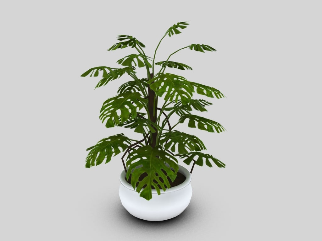 3d potted philodendron model